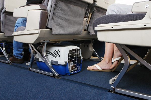 перевозка собаки в салоне самолета