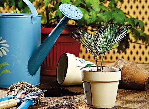 провоз растений в ручной клади и багаже