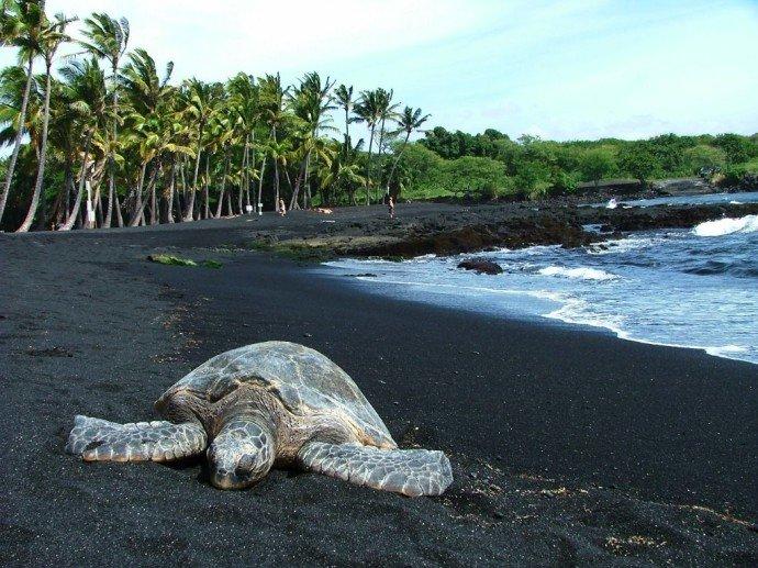 Черный пляж Пуналулу на Гаваях