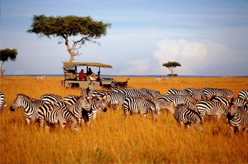На сафари в Кению всего за 22 634₽ туда и обратно из Москвы
