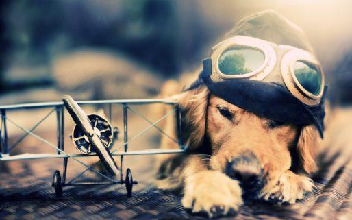 Pilot-Dog-1280x800