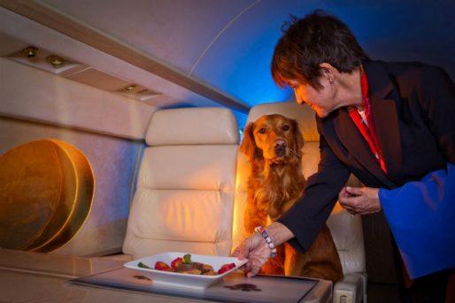 Animais recebem tratamento VIP